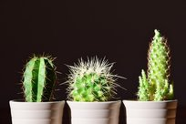 How Plants Can Give Your Office a Boost